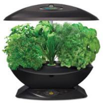 AeroGarden 7 A Hydroponic Herb Growing Kit for Indoors
