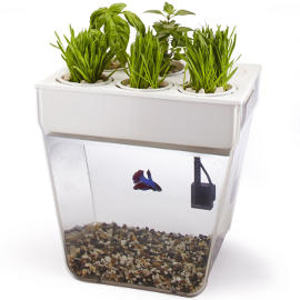 aquafarm an eco friendly aquaponic fish tank herb