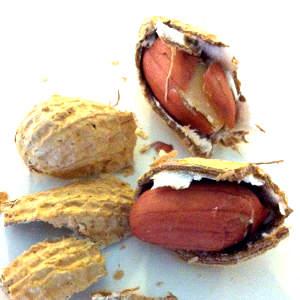 Aflatoxin Food List