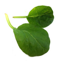 Tatsoi's Health Benefits