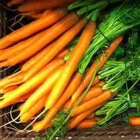 Carrots and Beta-Carotene