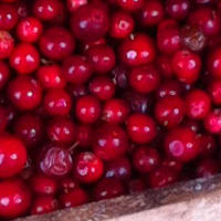Cranberry Side Effects