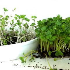 Microgreens Are Rich in Beta-Carotene