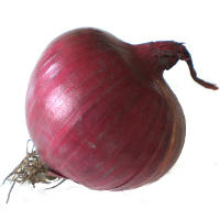 Onion: Health Benefits