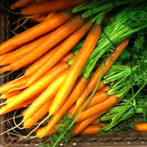 Organic Carrots Are Low in Nitrates - Ture or False